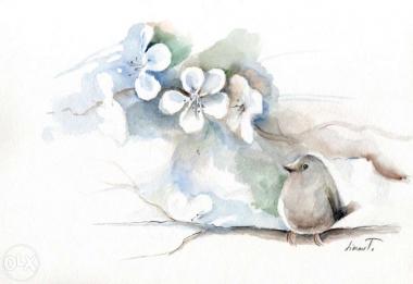 kedves, madárkás képeket készítek